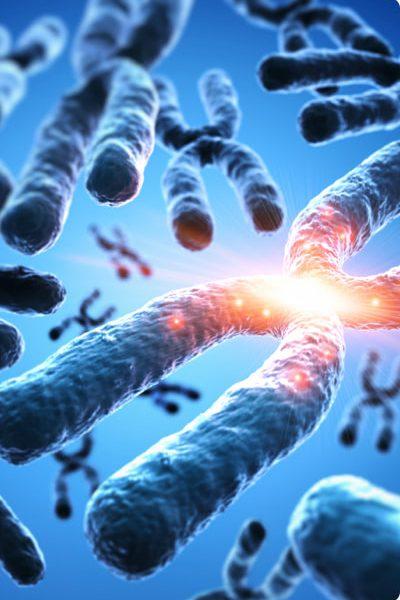 Cytogenetika